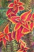 Lush Drawings - Fabulous Coleus by Barbara Ebeling