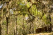 Oak Trees Framed Prints - Fabulous Spanish Moss Framed Print by Christine Till