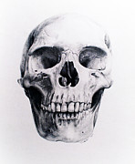 Human Skeleton Drawings - Face Removed by Sarah Sutherland