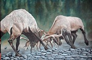 Elk Horns Painting Framed Prints - Face to Face Framed Print by Jean Yves Crispo