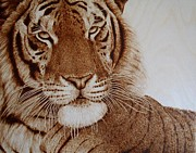 Original Wood Burning Pyrography - Face to Face Tiger by Cara Jordan