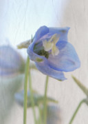 Wall Art Garden Prints - Facing the Delphinium Print by Lisa Knechtel