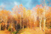 Bare Trees Art - Faded Forest - Blue Ridge Mountains by Dan Carmichael