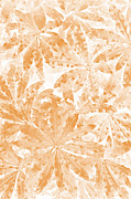 Stock Photo Digital Art - Faded leaves by Martin  Fry