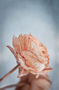 Withered Posters - Faded Rose Poster by Viaina