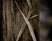 Fence Post Prints - Fading Ribbon Print by Odd Jeppesen