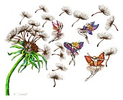 Dandelion Drawings - Fairies by Karen Sirard