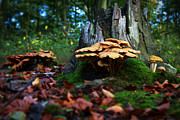 Blue Mushrooms Photo Posters - Fairy Land Poster by Jason Means
