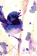 Dawn Derman - Fairy-wren