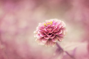 Pink Flower Prints Metal Prints - Fairytale Ending Metal Print by Amy Tyler