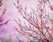 Fuschia Posters - Fairytale Redbud in Pink Poster by Lisa Russo