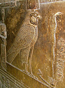 Temple Of Hathor Metal Prints - Falcon as Symbol of Horus the God of War in Temple of Hathor Metal Print by Ruth Hager