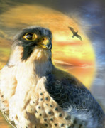 Bird Of Prey Art Prints - Falcon Sun Print by Carol Cavalaris