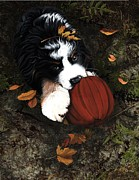 Bernese Mountain Dog Posters - Fall 4 U Poster by Liane Weyers