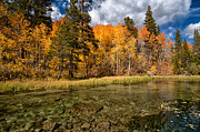 Fall Grass Metal Prints - Fall Along Bishop Creek Metal Print by Cat Connor