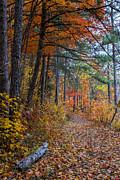 Barbara Bowen - Fall along the Upper Lake Trail