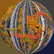 Photos Of Autumn Photos - Fall Art Nouveau by Scott Cameron