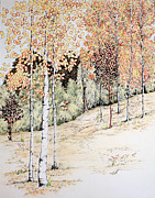 Fall Artwork Drawings Framed Prints - Fall Aspen Trees Framed Print by Tammie Temple