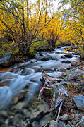 River Landscape Framed Prints - Fall at Big Pine Creek Framed Print by Cat Connor
