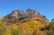 Mary Almond Art - Fall at Seneca Rocks by Mary Almond