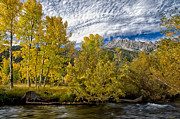 Trees Prints - Fall at Tioga Pass Print by Cat Connor