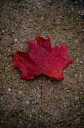 BandC  Photography - Fall