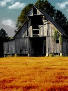 Farming Barns Digital Art Posters - Fall Barn Poster by Kristie  Bonnewell