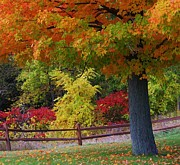 Split Rail Fence Framed Prints - Fall Beauty Framed Print by Flora Ehrlich