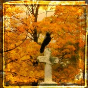 Passerines Prints - Fall Burst Print by Gothicolors And Crows