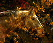Horse Head Digital Art - Fall Camoflauge by Judy Wood
