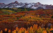 Golds Photo Framed Prints - Fall Carpet of Color Framed Print by Darren  White