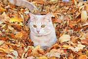 Linda Storm - Fall cat