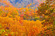 Dave Bosse - Fall Color 3