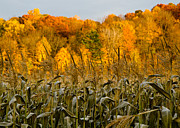 Sweet Corn Farm Prints - Fall Color III Print by Tim  Fitzwater