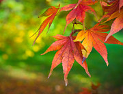 Fall Leaves Photo Originals - Fall Color by Jeff Klingler