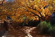 Tam Ryan - Fall Color Path