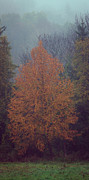 Adam Caron Metal Prints - Fall Colors Metal Print by Adam Caron