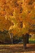 Fall Photos Prints - Fall colors Print by Adam Romanowicz