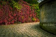 Alex Saunders - Fall Colors