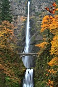 A River In Autumn Posters - Fall Colors At Multnomah Poster by Adam Jewell