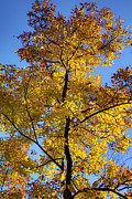Beautiful Tree Photos - Fall Colors Beautiful Tree by Dustin K Ryan
