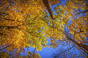 LeeAnn McLaneGoetz McLaneGoetzStudioLLCcom - Fall Colors in the Sky