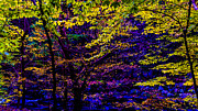 Fall Photographs Posters - Fall Colors Poster by Louis Dallara