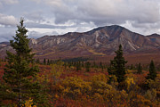 Chris Heitstuman - Fall Colors of Denali