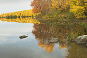 Trees Reflecting In Water Metal Prints - Fall colors on Taylor Pond Mount Vernon Maine Metal Print by Keith Webber Jr