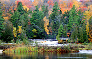 Crisp Mixed Media Posters - Fall colors on the  Tahquamenon River   Poster by Optical Playground By MP Ray