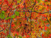 Fall Colors Print by Robert Mitchell