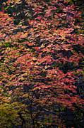 Saija  Lehtonen - Fall Colors