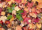 Steven Ralser - Fall colors