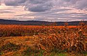 Kathleen K Parker - Fall Corn Fields of West Virginia